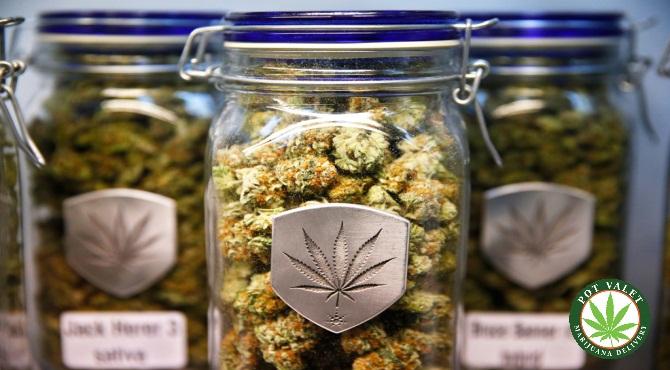 Guide to the Wonders ofMarijuana