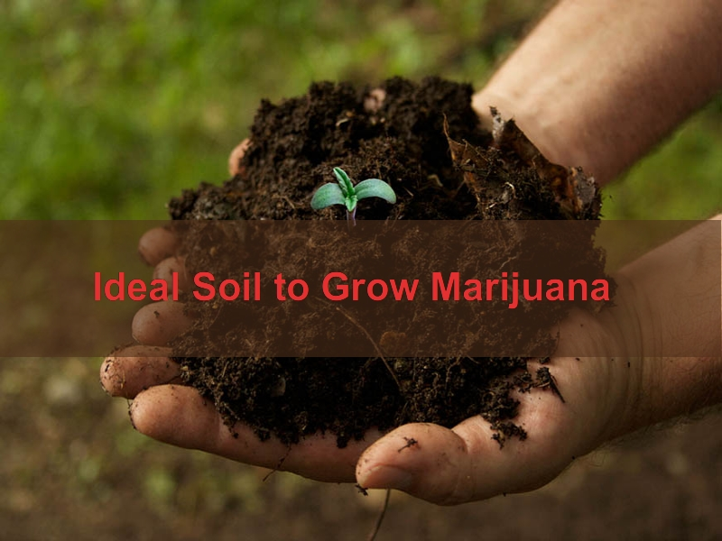 Soil For Growing Marijuana
