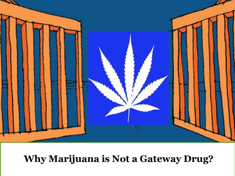 Facts Disproving Marijuana a Gateway Drug