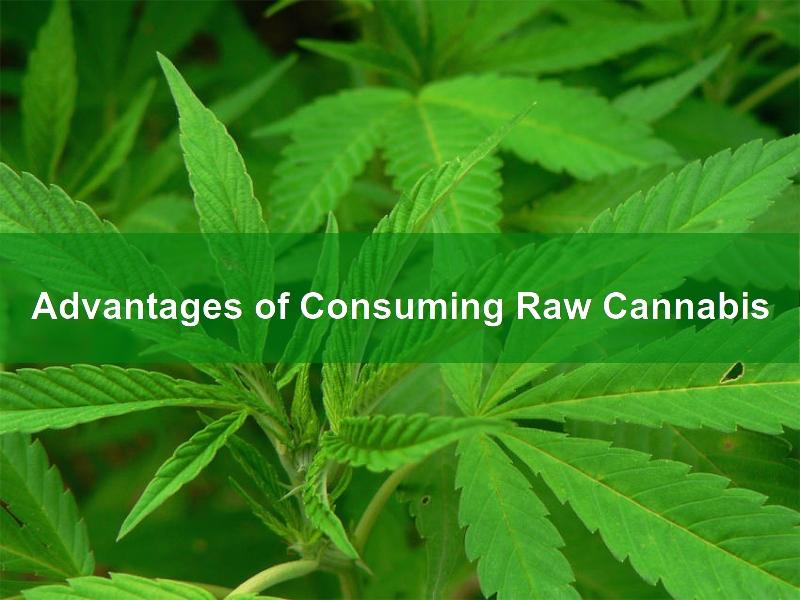 Consuming Raw Cannabis