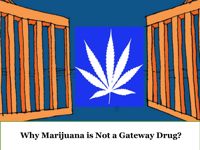 Facts Disproving Marijuana a Gateway Drug